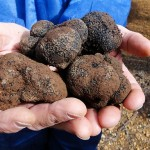 Rare Experience – Truffle Hunting Vacation Package
