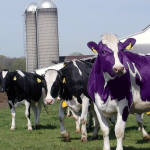 "Are You Giving Your Customers a ""Purple Cow""?"